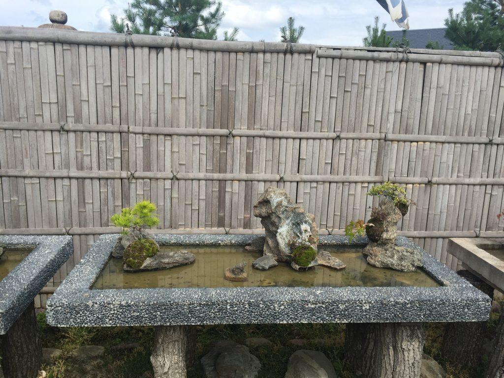 Japoniskas sodas