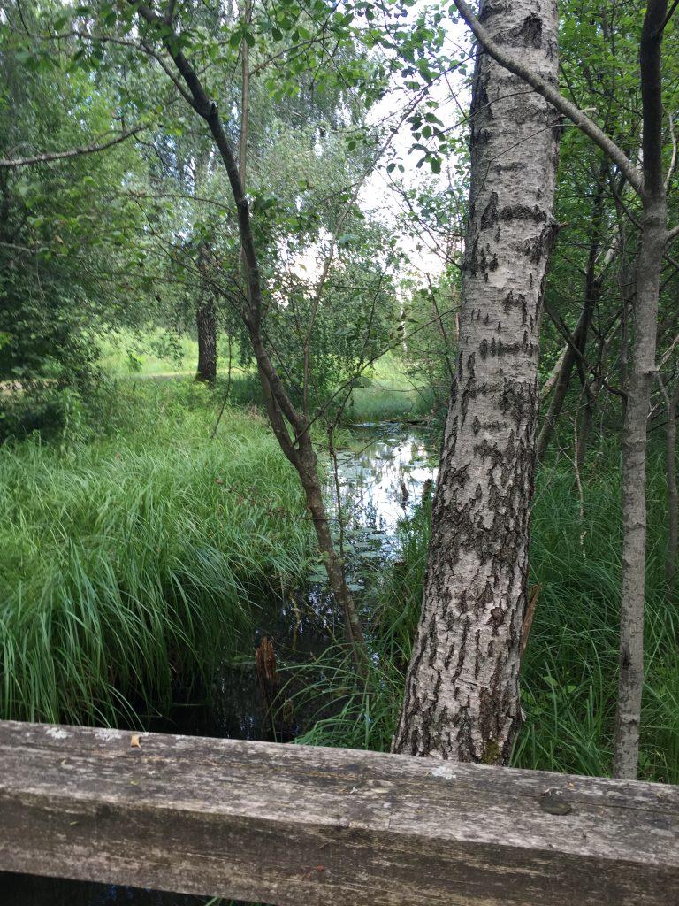 Giliaus ezero pazintinis pesciuju takas