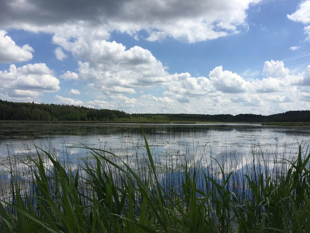 juodles ezeras