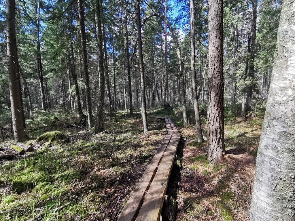 Labanoro girios pėsčiųjų takas